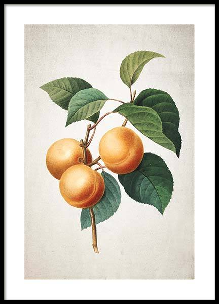 Apricot Poster in the group Posters & Prints / Kitchen at Desenio AB (3513)