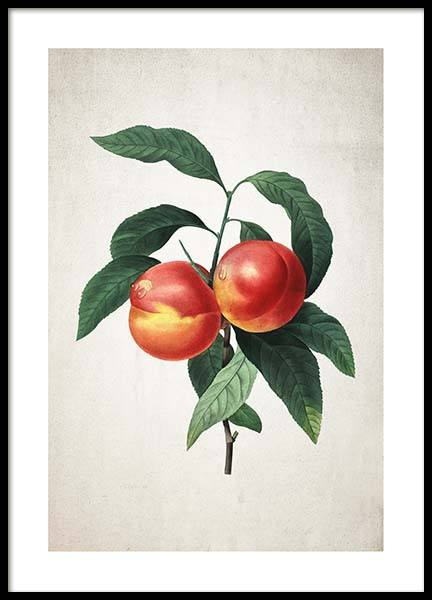 Peach Poster in the group Posters & Prints / Kitchen at Desenio AB (3514)