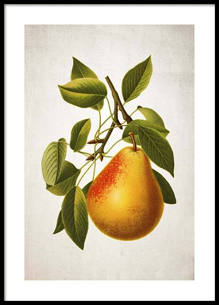 Pear Poster in the group Posters & Prints / Kitchen at Desenio AB (3515)
