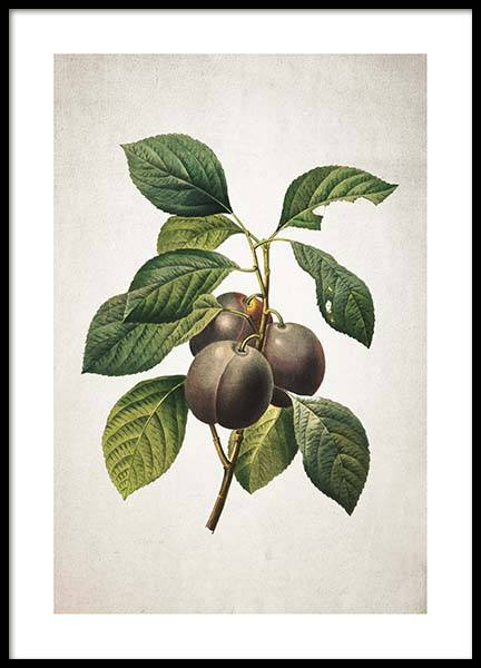 Plum Poster in the group Posters & Prints / Kitchen at Desenio AB (3516)