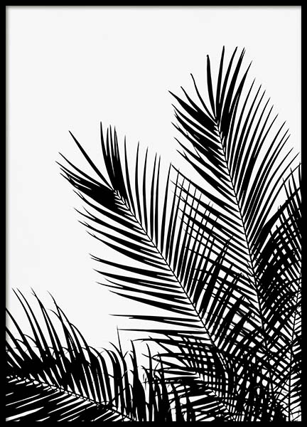 Black Palm Tree One Poster in the group Posters & Prints / Black & white at Desenio AB (3523)