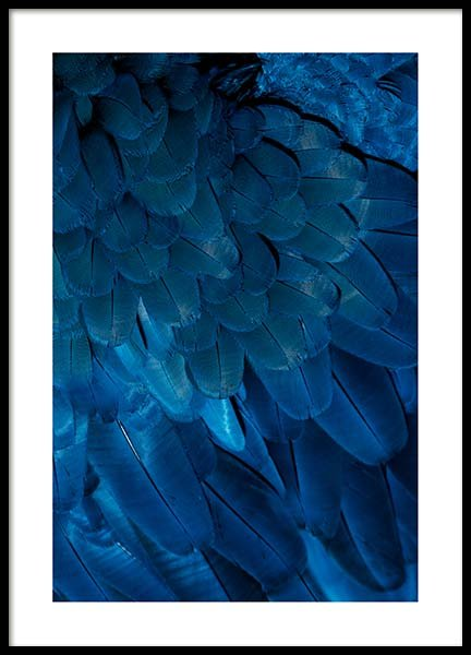 Deep Blue Feathers Poster in the group Posters & Prints / Photography at Desenio AB (3538)