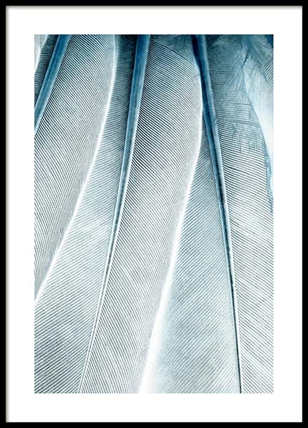 Feathers Close Up Poster in the group Posters & Prints / Photography at Desenio AB (3539)