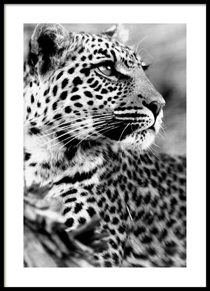 Leopard Poster in the group Posters & Prints / Black & white at Desenio AB (3541)