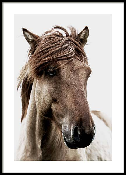 Brown Horse Poster in the group Posters & Prints / Photography at Desenio AB (3544)