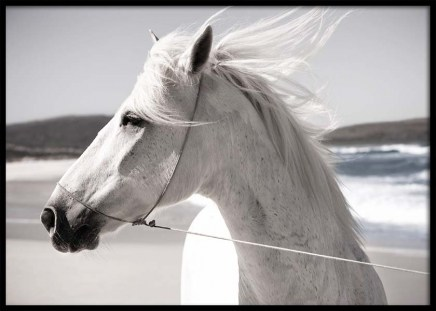 White Horse On Beach Poster in the group Posters & Prints / Photography at Desenio AB (3547)