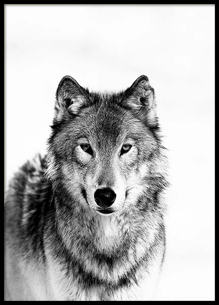Wolf B&W Poster in the group Posters & Prints / Insects & animals at Desenio AB (3548)