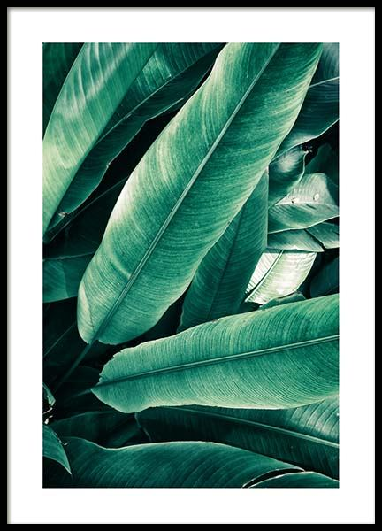 Banana Leaves Close Up Poster in the group Posters & Prints / Photography at Desenio AB (3549)