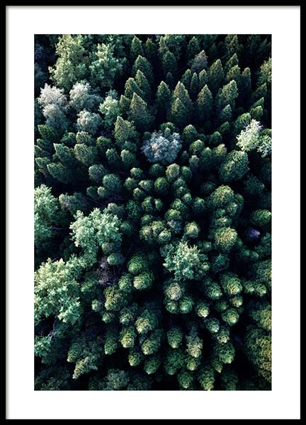 Forest Aerial Poster in the group Posters & Prints / Nature at Desenio AB (3576)