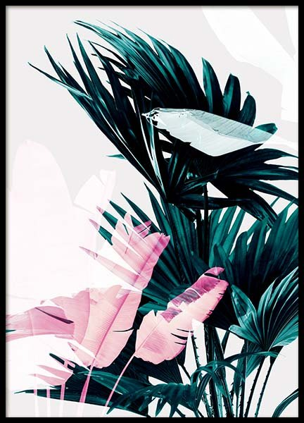 Palm Exposure Poster in the group Posters & Prints / Botanical at Desenio AB (3591)