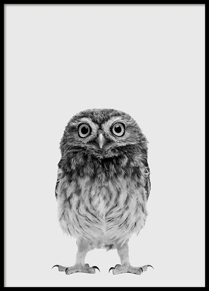 The Little Owl Poster in the group Posters & Prints / Kids posters at Desenio AB (3637)