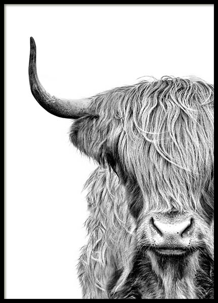 Highland Cow Close Up Poster in the group Posters & Prints / Black & white at Desenio AB (3638)