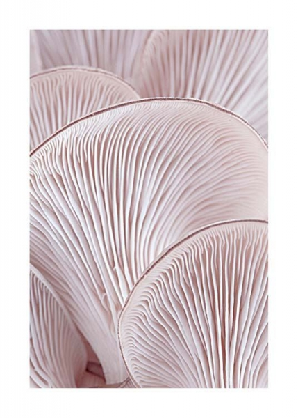 Pink Oyster Pattern Two Poster in the group Posters & Prints / Photography at Desenio AB (3653)
