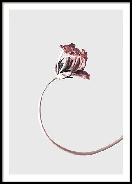 Simple Elegance Poster in the group Posters & Prints / Botanical at Desenio AB (3656)