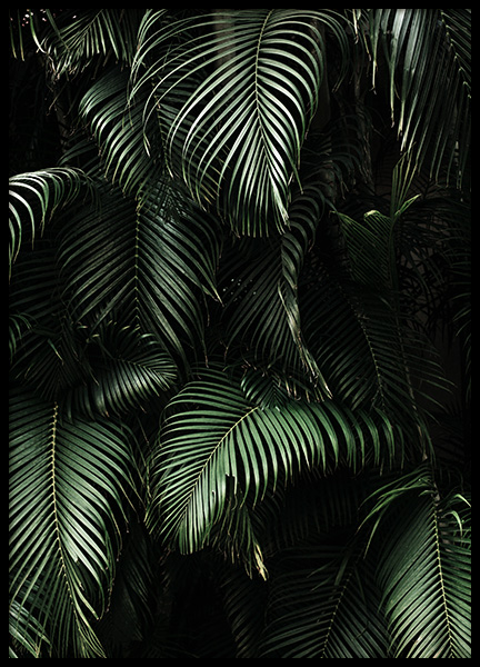 Dark Green Palm Leaves No2 Poster in the group Posters & Prints / Botanical at Desenio AB (3773)