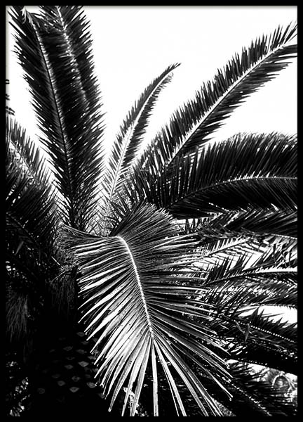 Palm Tree Crown Poster in the group Posters & Prints / Black & white at Desenio AB (3774)