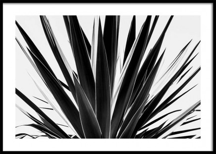 Agave B&W Poster in the group Posters & Prints / Black & white at Desenio AB (3778)