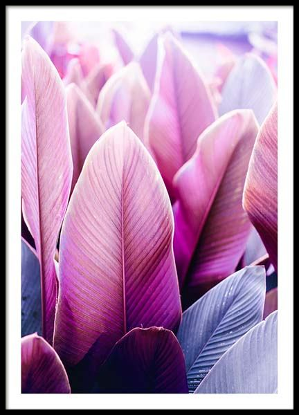 Pink Tropical Leaves Poster in the group Posters & Prints / Botanical at Desenio AB (3785)