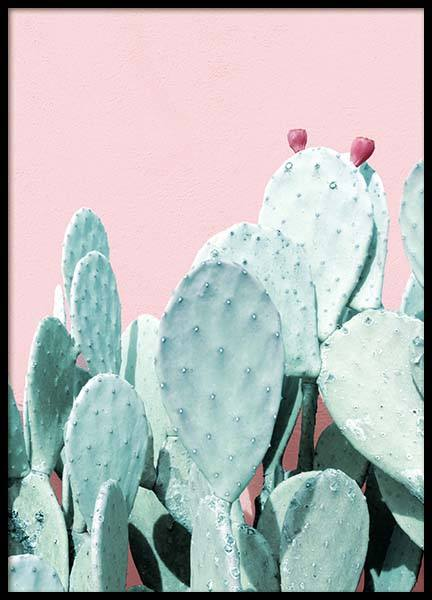 Pastel Cactus No3 Poster in the group Posters & Prints / Botanical at Desenio AB (3792)