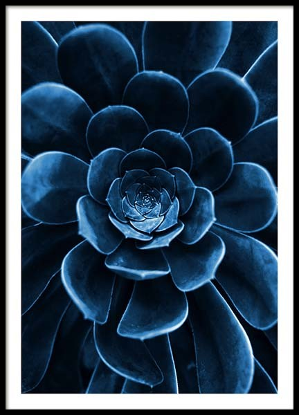 Blue Succulent Poster in the group Posters & Prints / Photography at Desenio AB (3826)