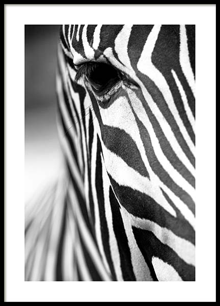 Zebra Close Up Poster in the group Posters & Prints / Insects & animals at Desenio AB (3855)
