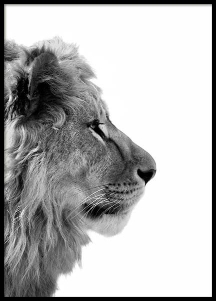 Lion From Side Poster in the group Posters & Prints / Black & white at Desenio AB (3892)