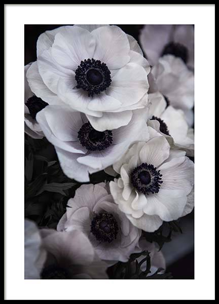 Anemone Flower Two Poster in the group Posters & Prints / Photography at Desenio AB (3928)