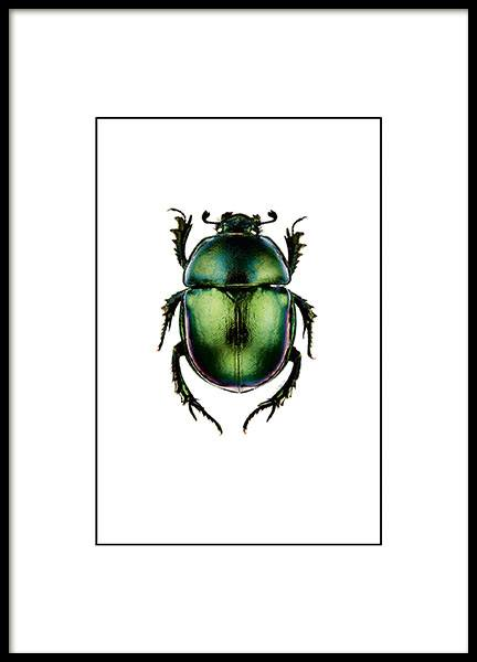 Posters and prints with insects, a small print with beetles, in green