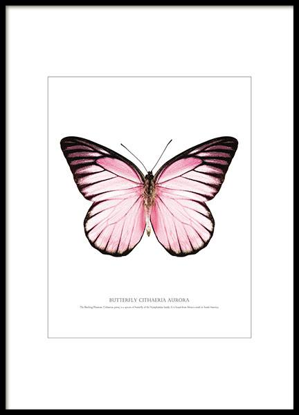 Prints and posters with butterflies and insects for bright and trendy interior d