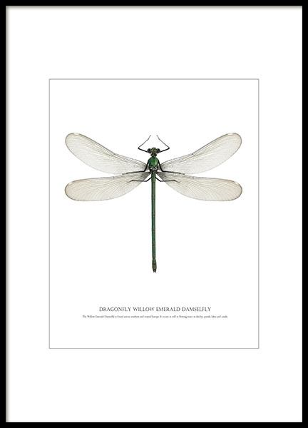 Bright poster with a dragonfly online, shop for cheap prints