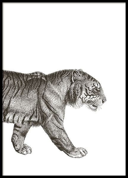 Black and white poster with illustration of a tiger for a black and white interi