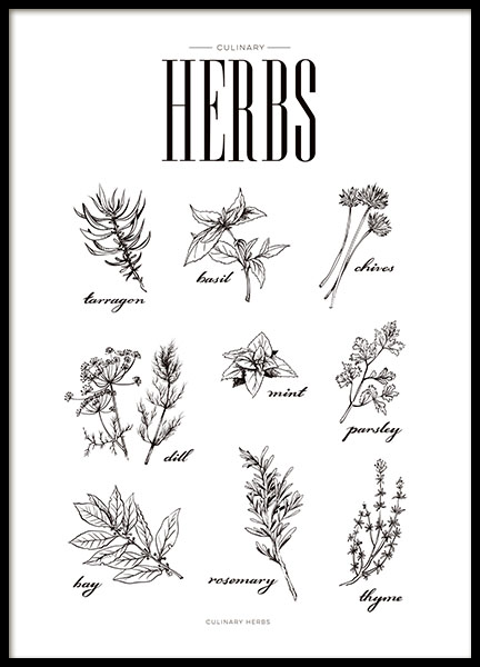 Print for the kitchen with herbs. Kitchen posters online.