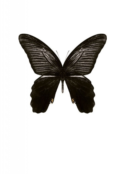 Stylish print with a butterfly, art prints online