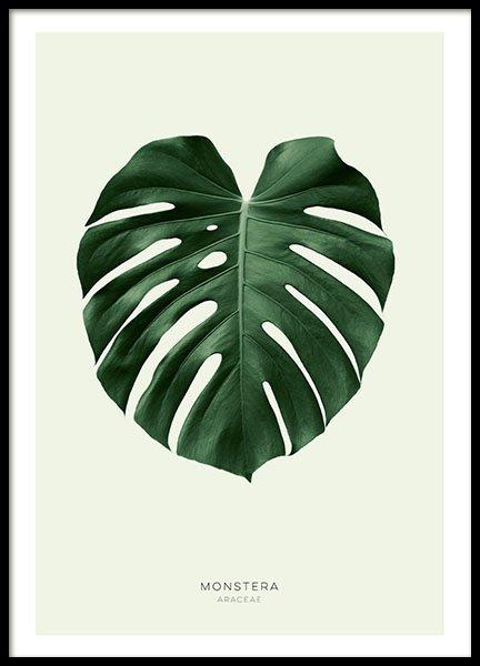 Green Monstera, Poster