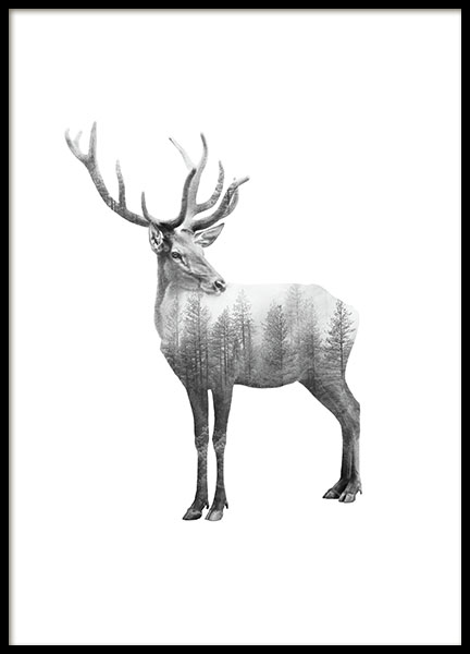 Prints with black and white photographs of animals. Nordic decor