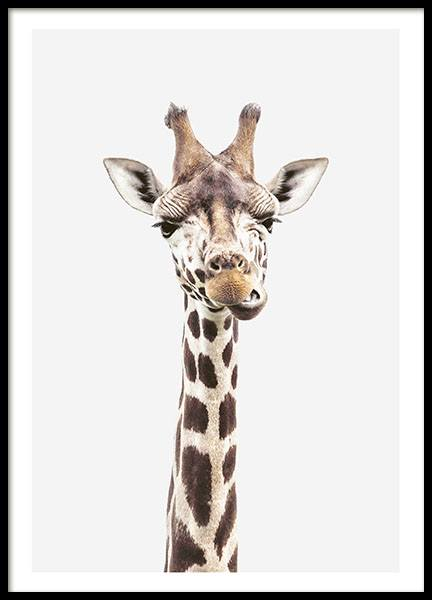 Baby Giraffe, Poster in the group Posters & Prints / Sizes / 40x50cm | 16x20 at Desenio AB (8358)