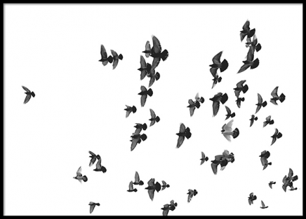 Flying Birds, Poster in the group Posters & Prints / Black & white at Desenio AB (8419)