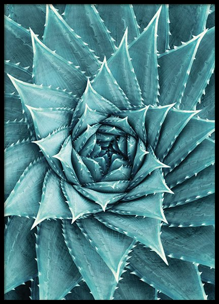 Aloe, Poster in the group Posters & Prints / Botanical at Desenio AB (8480)