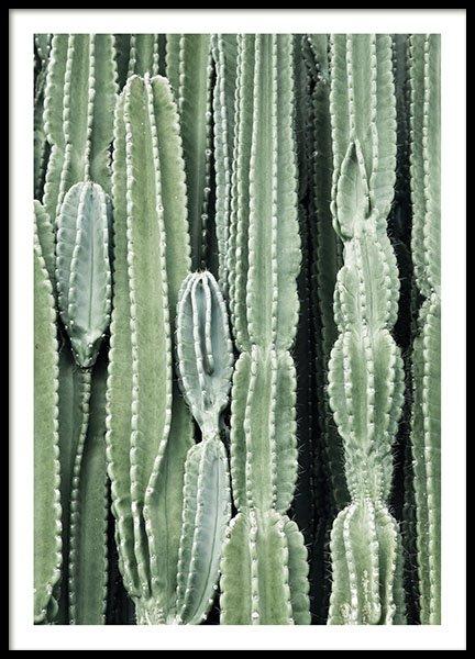 Cactus, Posters