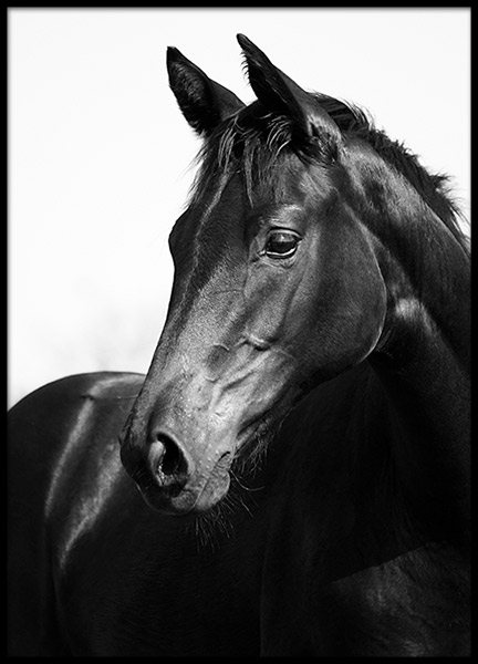Black Stallion, Posters in the group Posters & Prints / Photography at Desenio AB (8575)