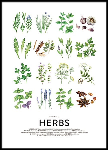 Culinary Herbs, Posters in the group Posters & Prints / Kitchen / Kitchen guides at Desenio AB (8589)