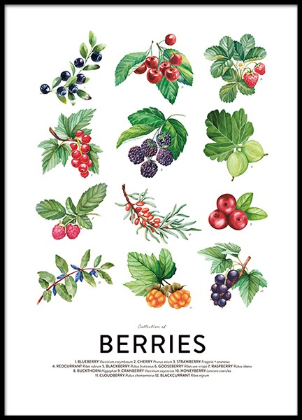 Berries, Posters in the group Posters & Prints / Kitchen at Desenio AB (8591)