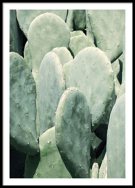 Pear cactus, poster in the group Posters & Prints / Sizes / 30x40cm | 11,8x15,7 at Desenio AB (8600)