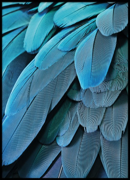 Petrol feathers, poster in the group Posters & Prints / Sizes / 30x40cm | 11,8x15,7