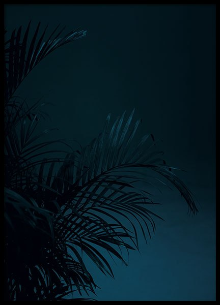Black Palm, Poster in the group Posters & Prints / Photography at Desenio AB (8618)