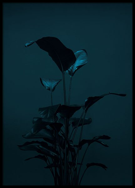 Black plant, poster in the group Posters & Prints / Sizes / 70x100cm | 27,6x39,4
