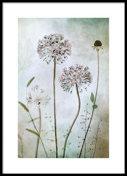 Allium poster in the group Posters & Prints / Sizes / 50x70cm | 19,7x27,6