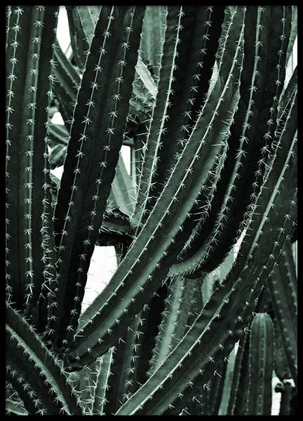 Cactus Arms Poster in the group Posters & Prints / Botanical at Desenio AB (8813)