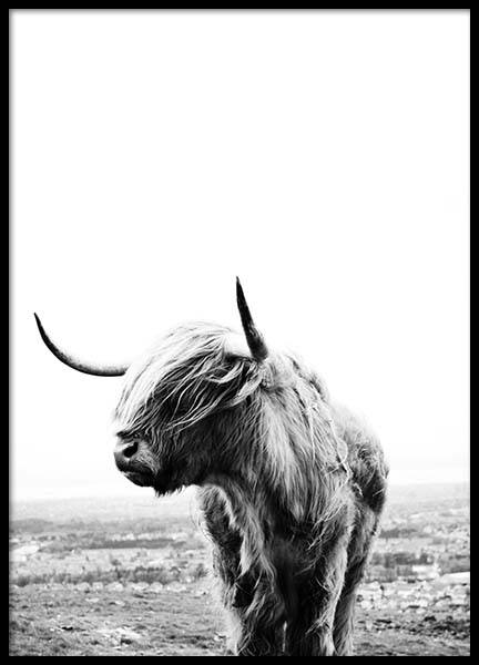 Highland cow Poster in the group Posters & Prints / Sizes / 40x50cm | 15,7x19,7 at Desenio AB (8825)