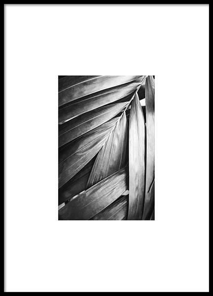 Palm Poster in the group Posters & Prints / Black & white at Desenio AB (8904)